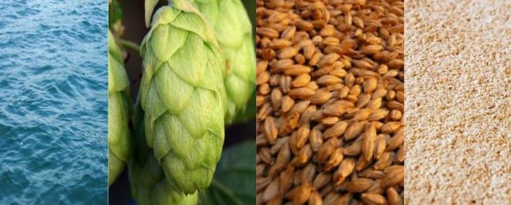 Beer Basics - The Ingredients